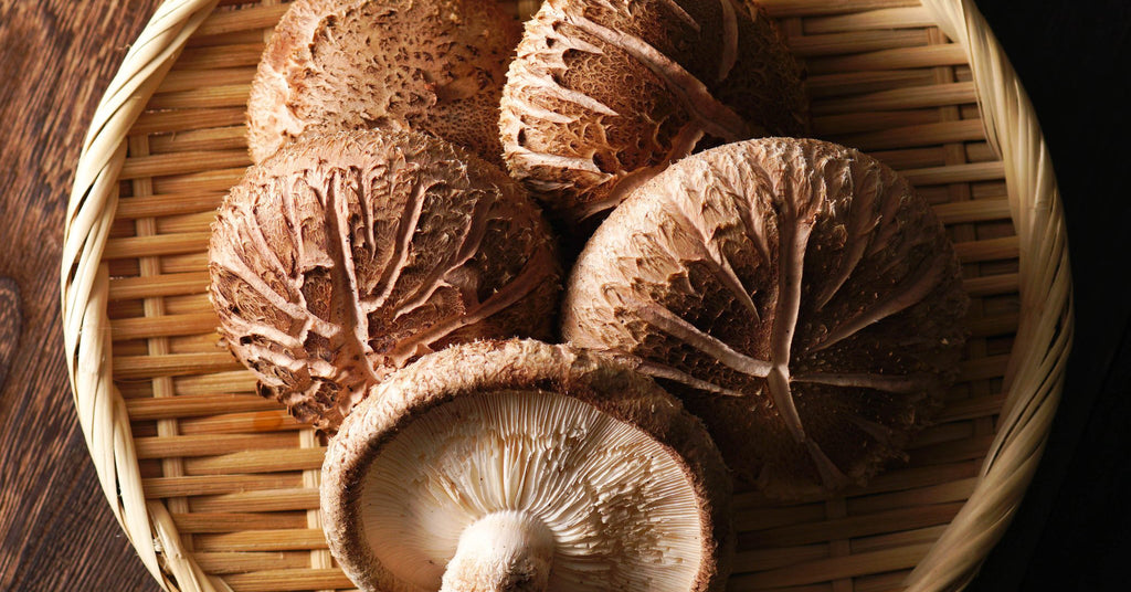 Shiitake Mushroom - Vital Pharmacy Supplies