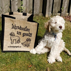 Labradoodles are great bag dog breed