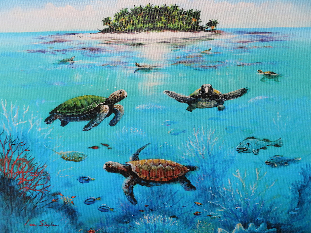 Turtles on the Great Barrier Reef