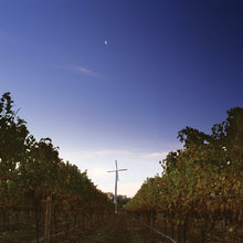 Load image into Gallery viewer, Little Beauty Single Vineyard Marlborough New Zealand.  Pinot Noir vines at dusk.
