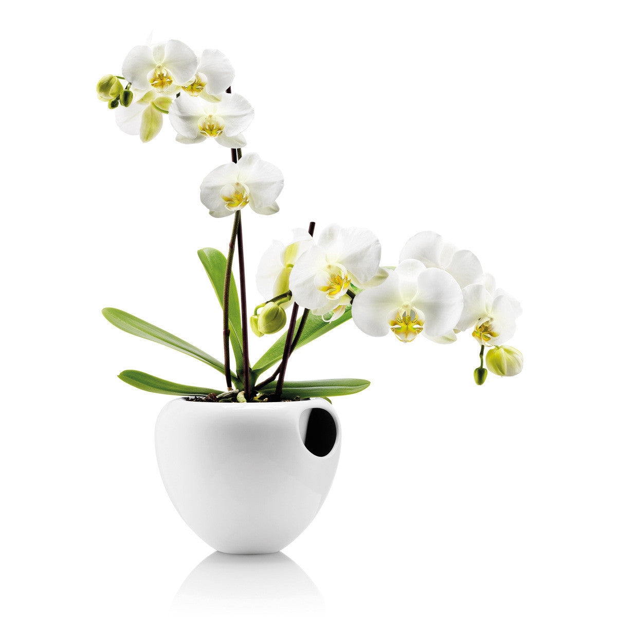 Eva Solo Orchid Pot Self-Watering Pot