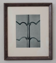 Load image into Gallery viewer, Photogravure Triptych - Karl Blossfeldt