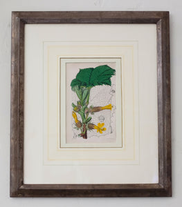 Hand-colored Botanical Lithographs