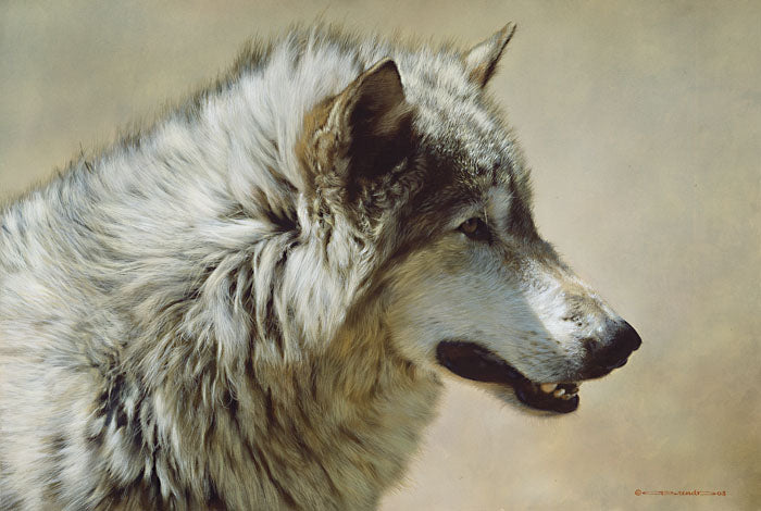 Steadfast and Resolute-Gray Wolf Portrait by Carl Brenders