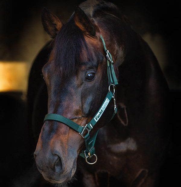 Horseware Fieldsafe Headcollar - Hoofprints Innovations