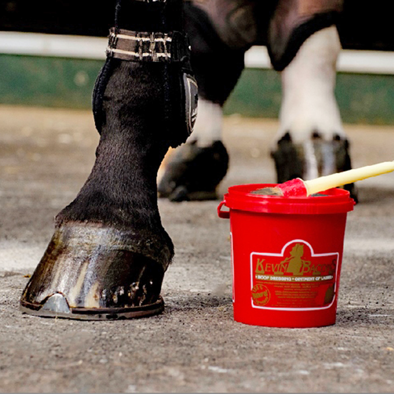 Kevin Bacon's Hoof Dressing - Hoofprints Innovations