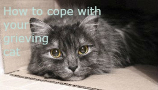 How to cope with a grieving cat