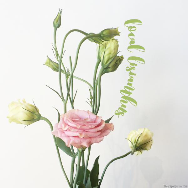 Spotlight on local flowers lisianthus