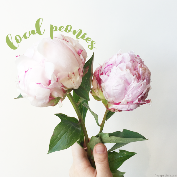 Spotlight on local flowers peonies