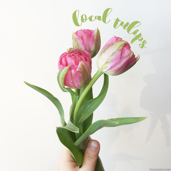 Spotlight on local flowers tulips