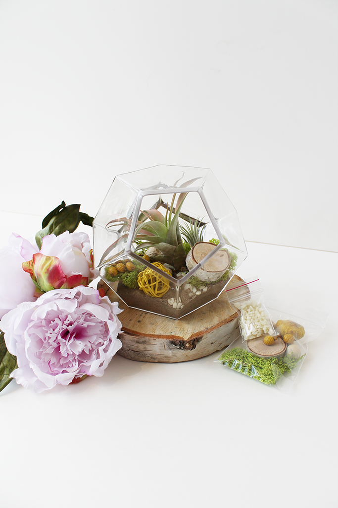Air Plant Terrarium Geometric Diamond
