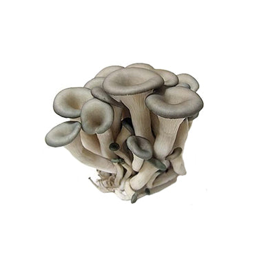 Organic Black Oyster Mushrooms 유기농 느타리 버섯 150g