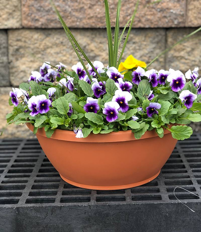 "12"" Pansy Color Bowl"