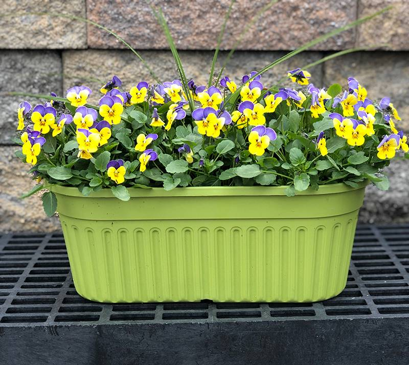 "16"" Pansy In Oval Planter"