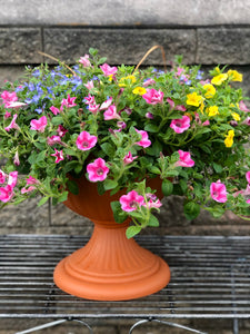 Spring Combo in Pedestal Planter