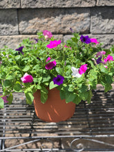 "Load image into Gallery viewer, 10"" Wave Petunia Combo Tub"