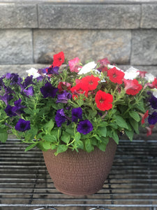 "Wave Petunia Combo in 10"" Deco Tub"