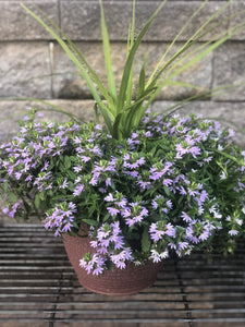 "Scaevola with spike in 10"" deco Tub"