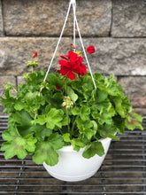 "Load image into Gallery viewer, 10"" Geranium HB"