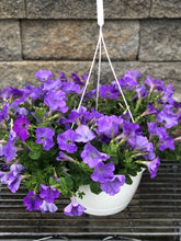 "Load image into Gallery viewer, 10"" Petunia HB"