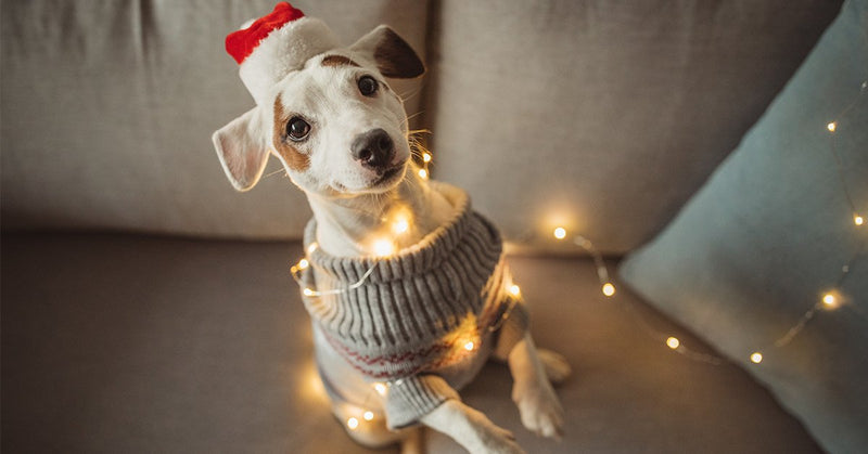 dog with smart holiday lights wrapped around hiim