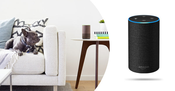 Echo Review