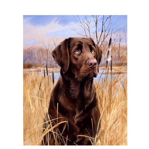 Chocolate Labrador in Field Paint By Numbers (4727001481347)