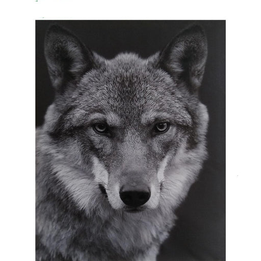 Grey Wolf Paint By Numbers (4737867579523)