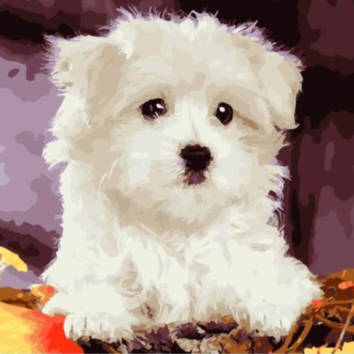 White Puppy Dog Paint by Numbers (4727002398851)