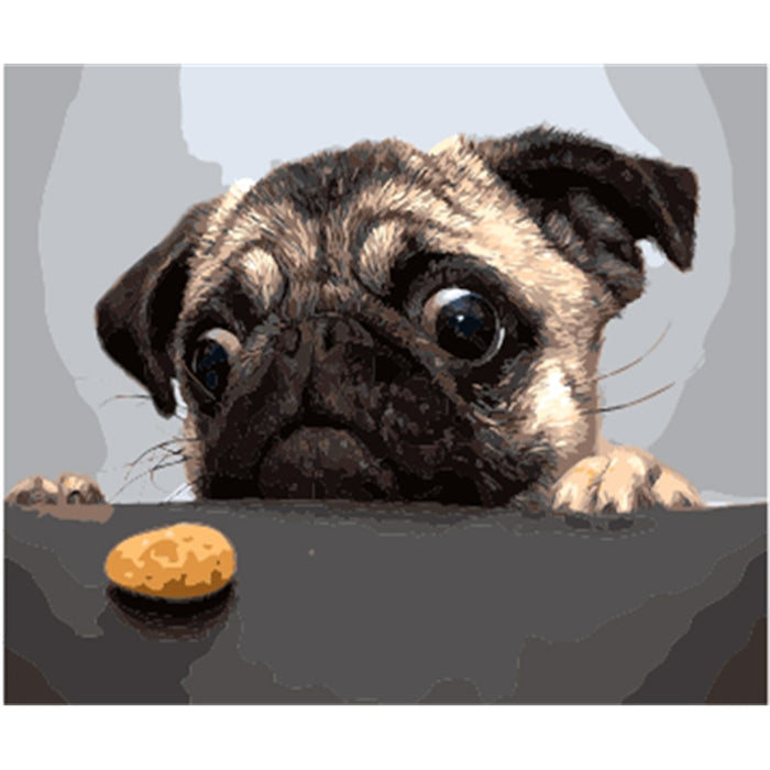 Pug Dog Paint by Numbers (4727002497155)