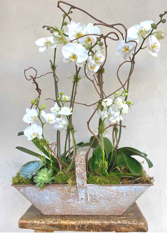 Luxe White Orchid