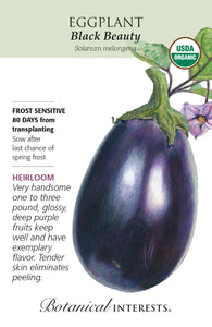 Eggplant - Black Beauty Organic