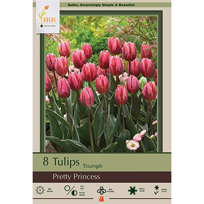 Tulip Pretty Princess