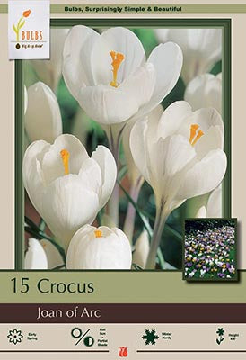 Crocus Joan of Arc