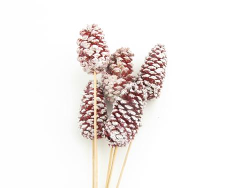 Pinecone on Stem Red with White Tip