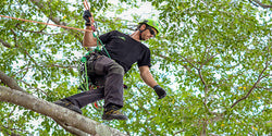 Industrial Climbing Gear for Arborists