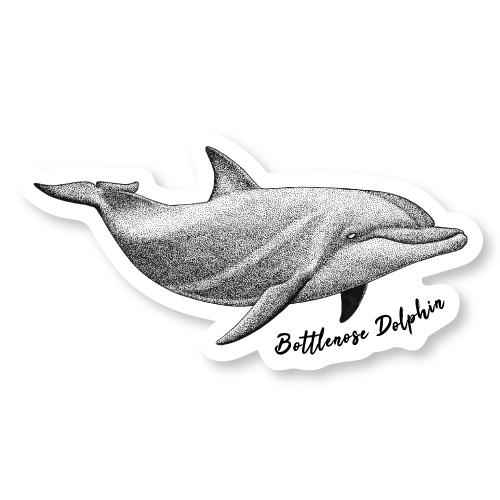 Bottlenose Dolphin Die Cut Decal