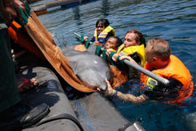 Load image into Gallery viewer, bali dolphin sanctuary rescue