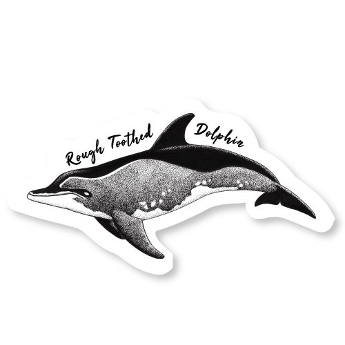Rough Toothed Dolphin Die Cut Decal