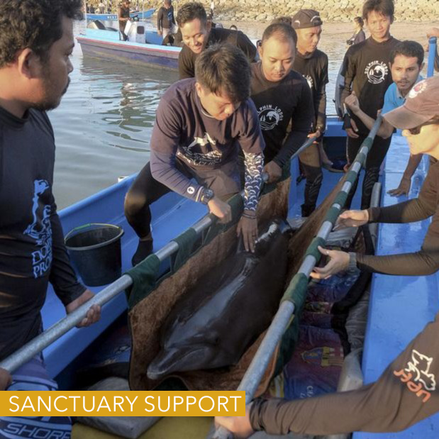 bali dolphin sanctuary support