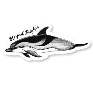 Striped Dolphin Die Cut Decal