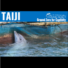 Load image into Gallery viewer, Taiji dolphin hunting informational postcard front