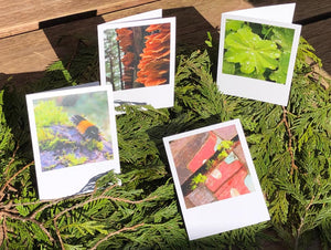 Glimpses of Ketchikan Set of Cards
