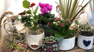 Indoor Plant Arrangements available for all occasions - order online or stop in store