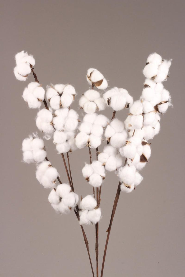 Cotton - Branched Stem