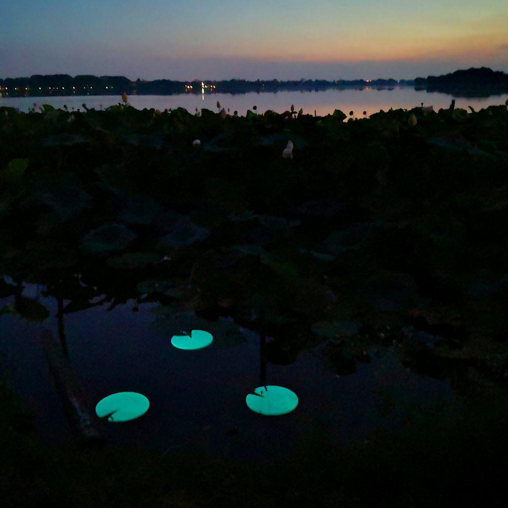 Modern Glow-In-The-Dark Wireless Pool Light | Event Lighting | Stylish Light Up Floating Lily Pad Pool Light | Pond Lighting