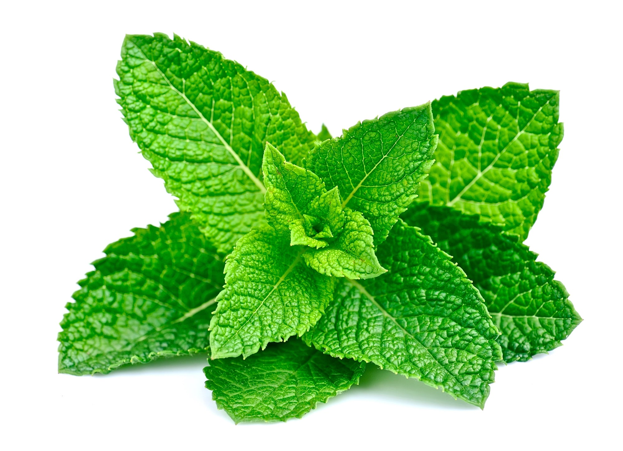 Fresh Mint 1 bunch