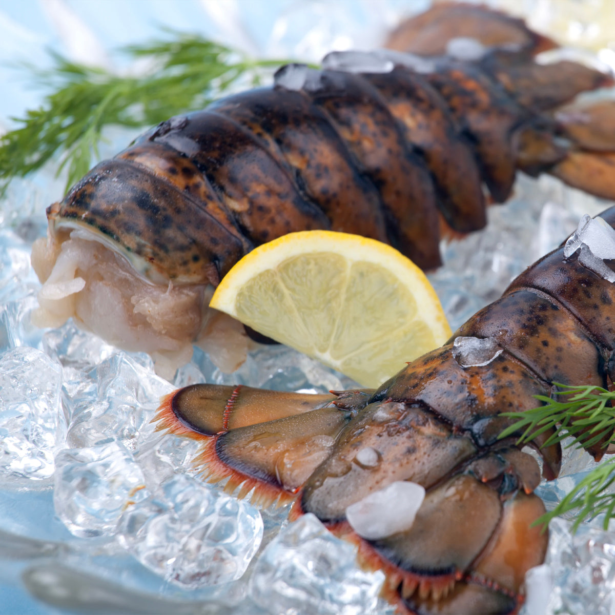 Lobster Tails (1lb)