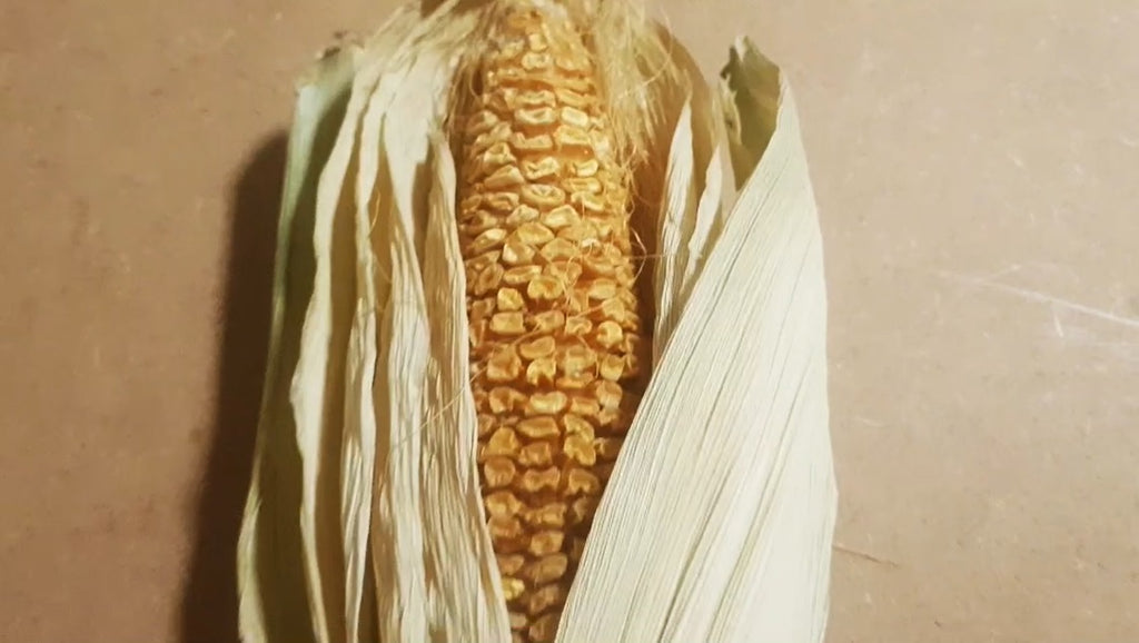 photography-composition-sweetcorn