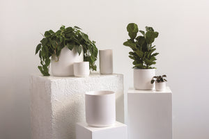 Minima Pot in White || 4.75""